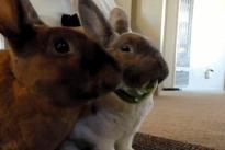 BunniesEating